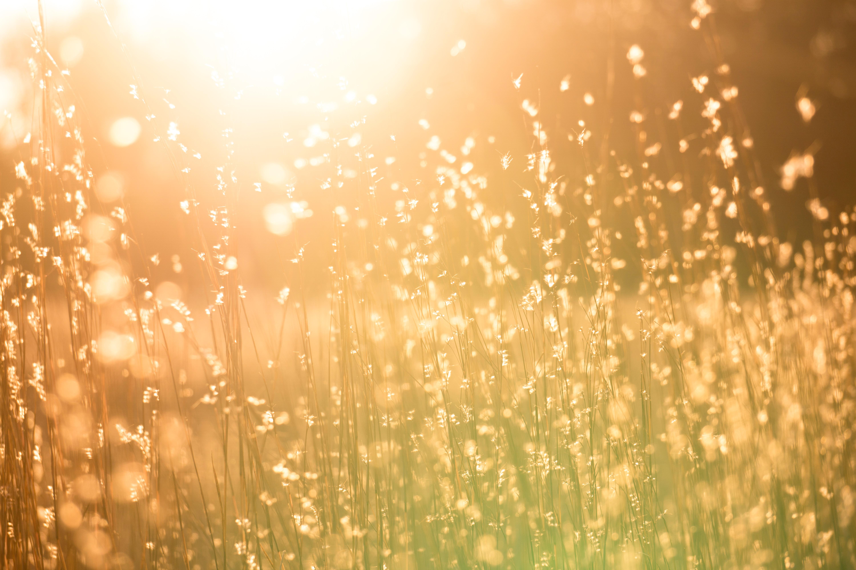 sun shining on grassy field
